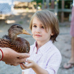 our boy meets a duckling     the love designed life