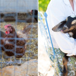 chickens and goats on the simple farm     the love designed life