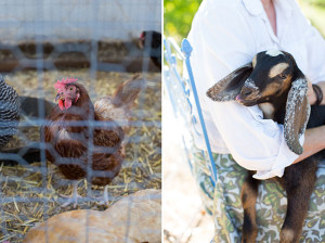 chickens and goats on the simple farm | | the love designed life