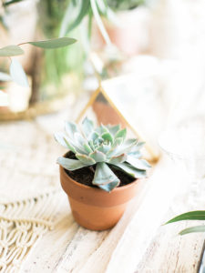 mini succulent | table design by paige of the love designed life