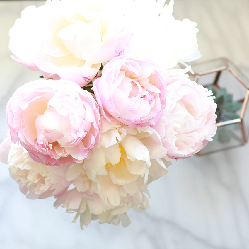 my peonies are showing off! | the love designed life