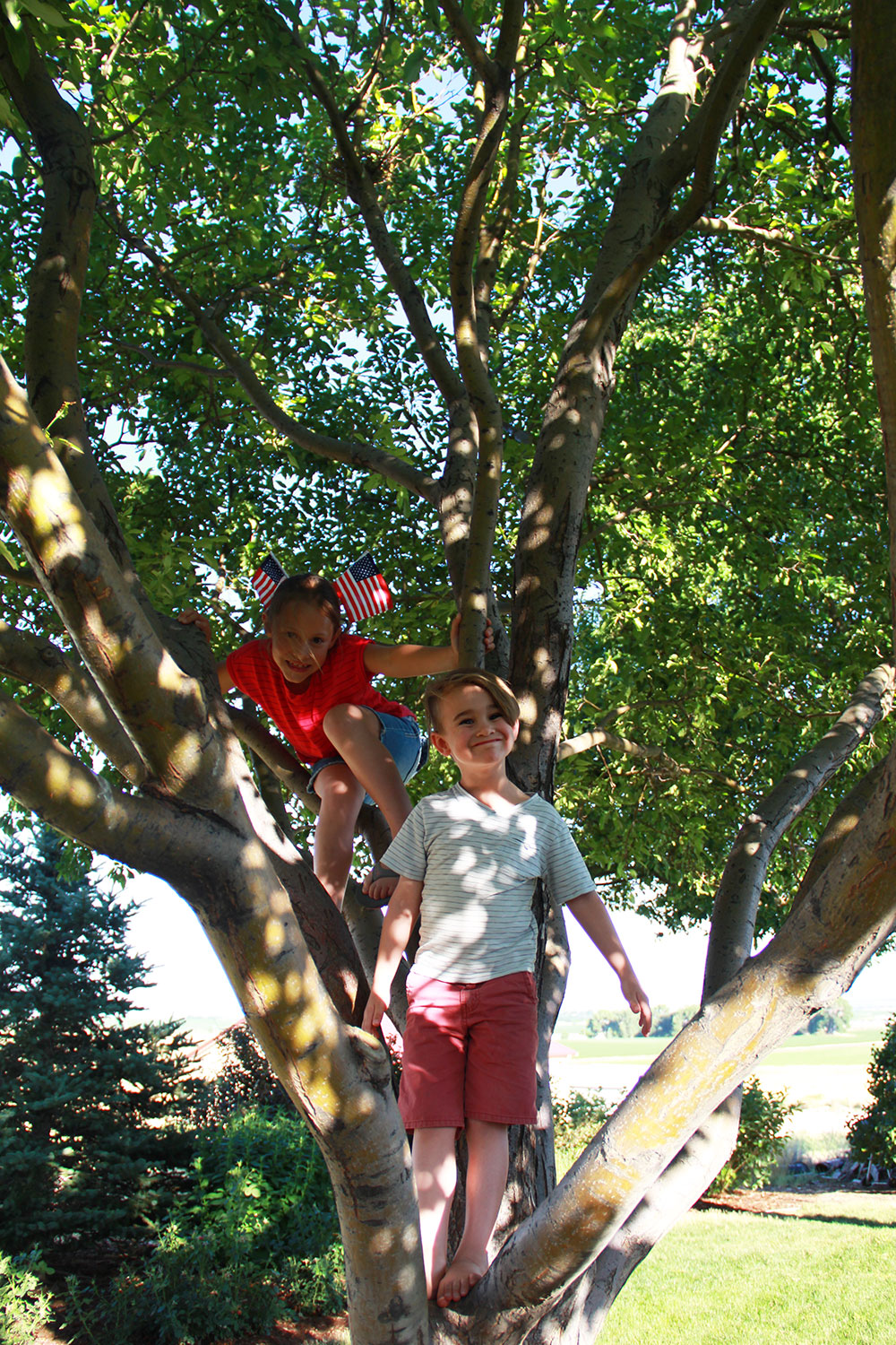 cousins climbing trees | the love designed life