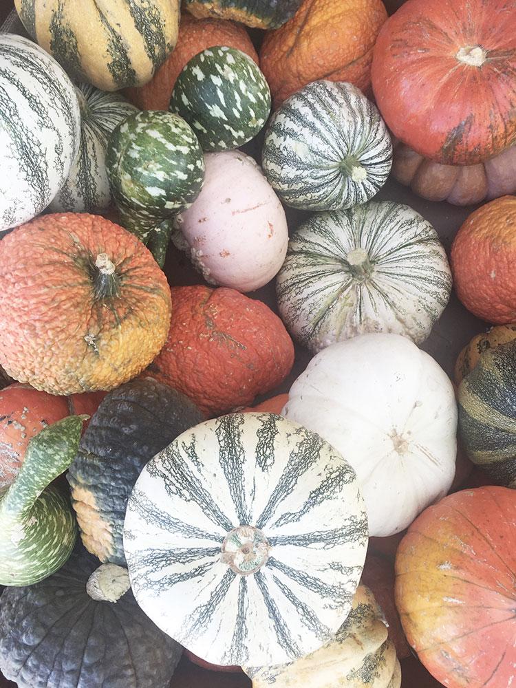 pumpkins pumpkins pumpkins | thelovedesignedlife.com