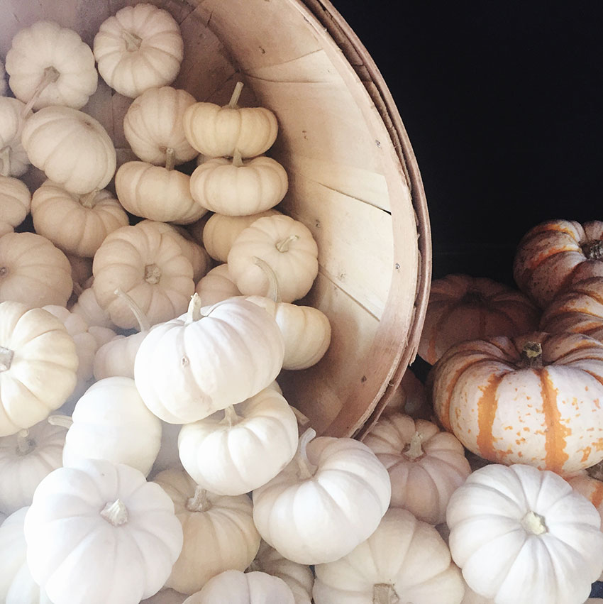 white pumpkins for the win. our fall bucket list of five fun things to do with your kids this fall | thelovedesignedlife.com