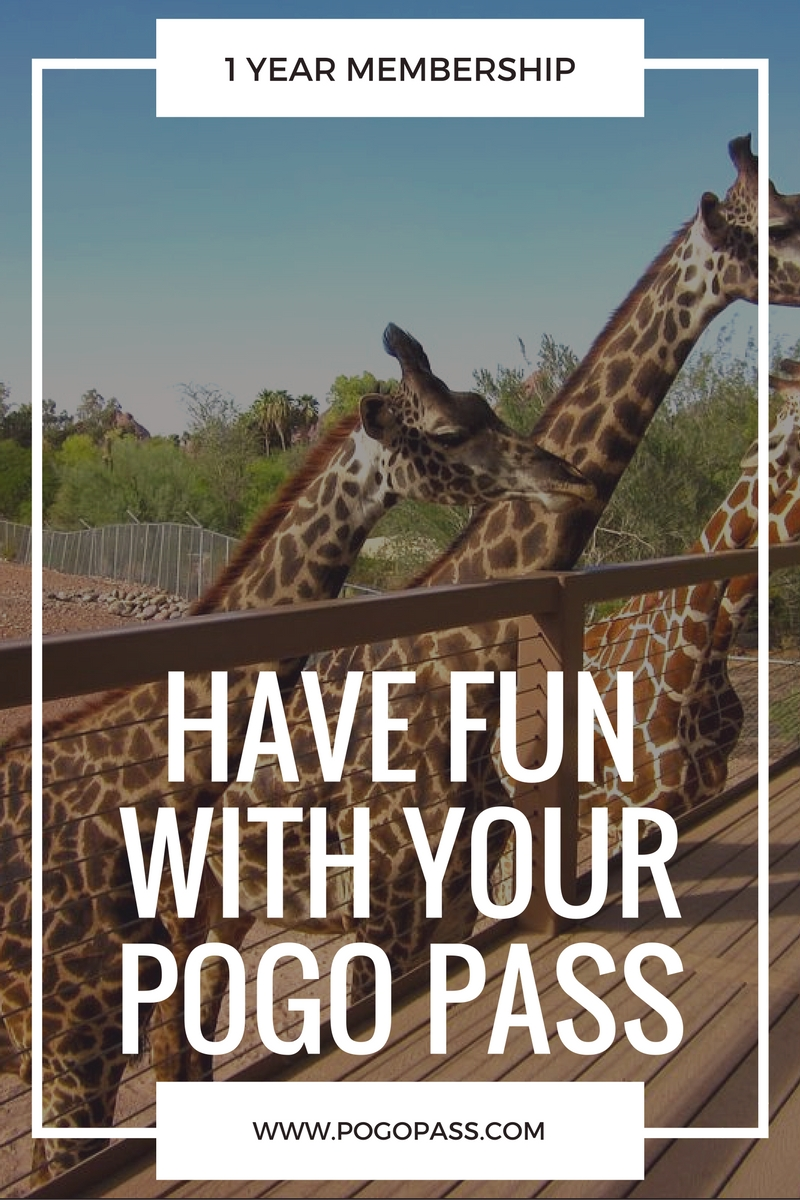 get 60% off of a POGO pass to tons of fun activities in phoenix! use code THELDLPOGO at check out | thelovedesignedlife.com