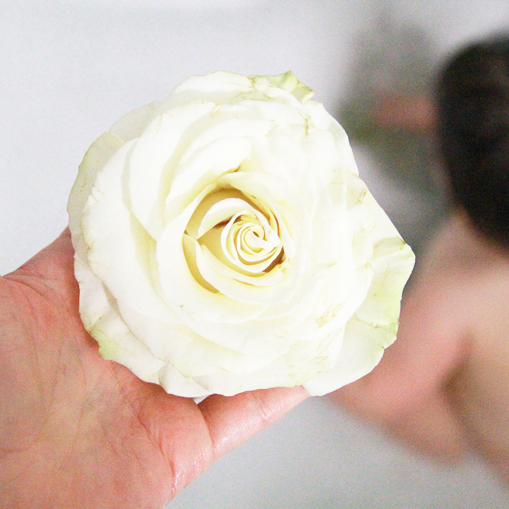 a rose headed for a baby milk bath | thelovedesignedlife.com