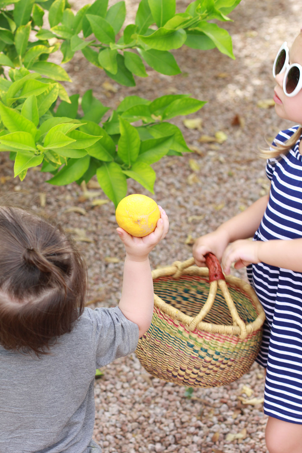my kids love gathering lemons in their baskets at our new home. | thelovedesignedlife.com