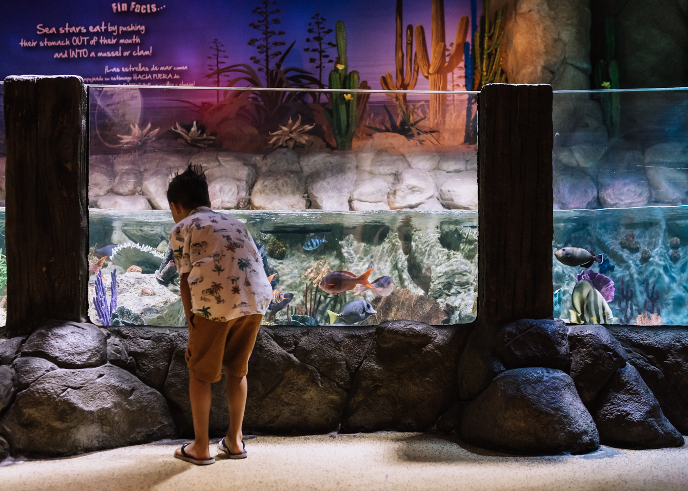 checking out the fish tanks at the SEA LIFE Aquarium Arizona | thelovedesignedlife.com #sealifeaquariumarizona #summerfun #funwithkids