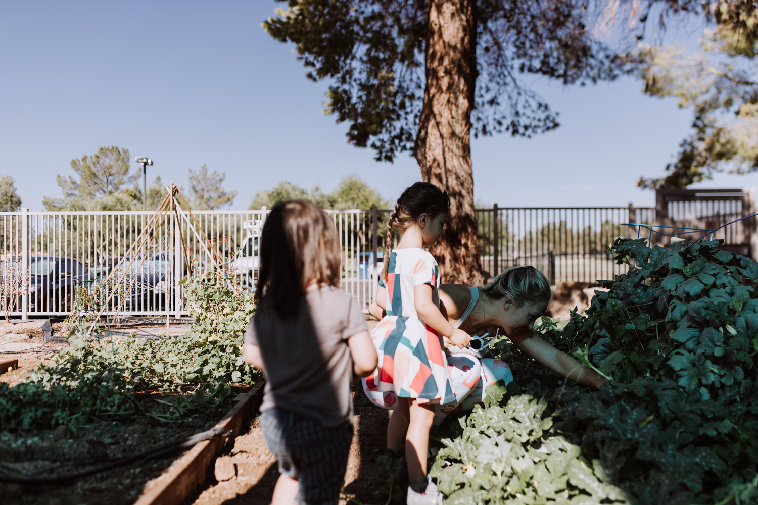 helping in the school garden with these kids! | thelovedesignedlife.com #gardeningforkids