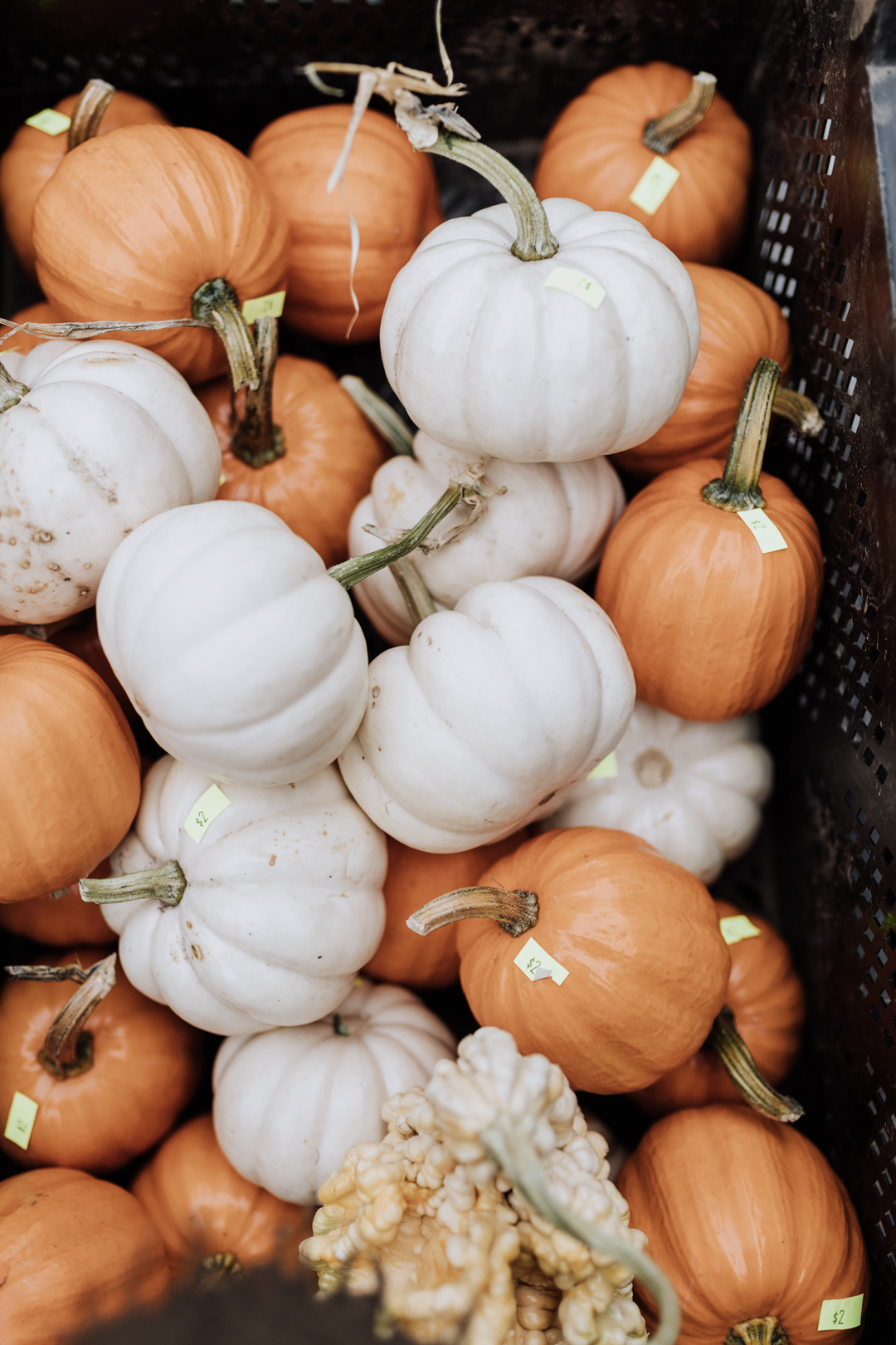cutest little pumpkins! | thelovedesignedlife.com #farmersmarket #pumpkins #fall