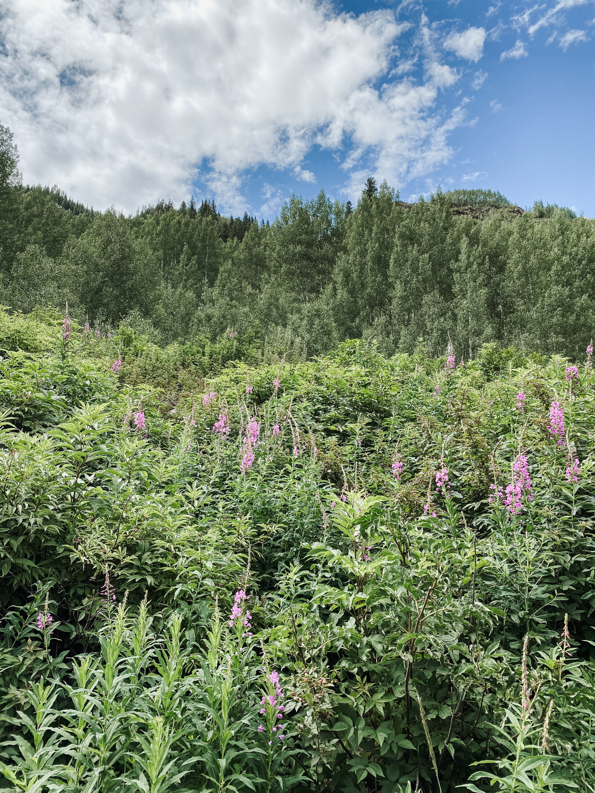 wildflowers in bloom in Maroon Bells hiking area. #thelovedesignedlife #maroonbells #wildflowers