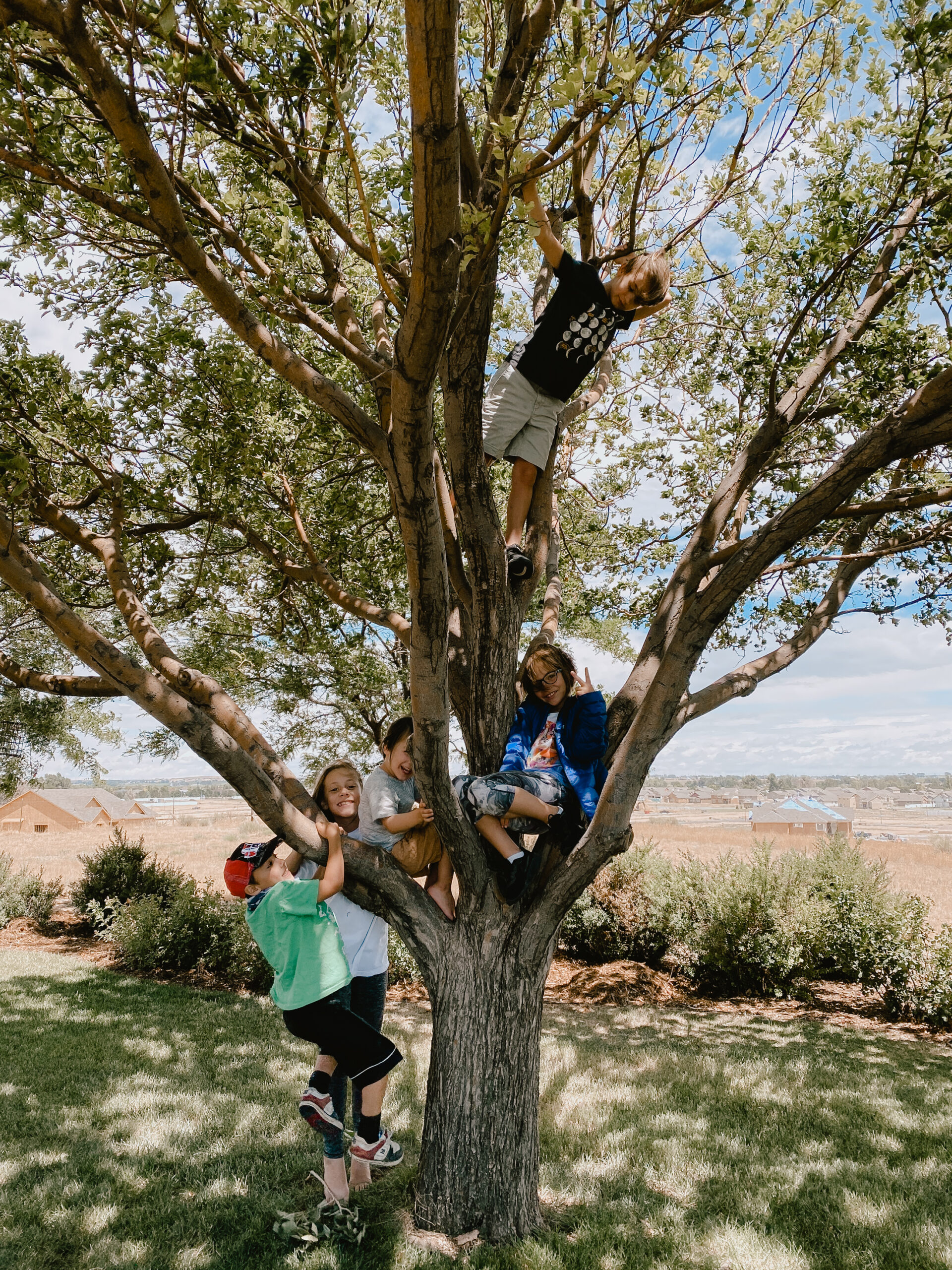 cousins in the tree. #treecliming #cousins #childsplay