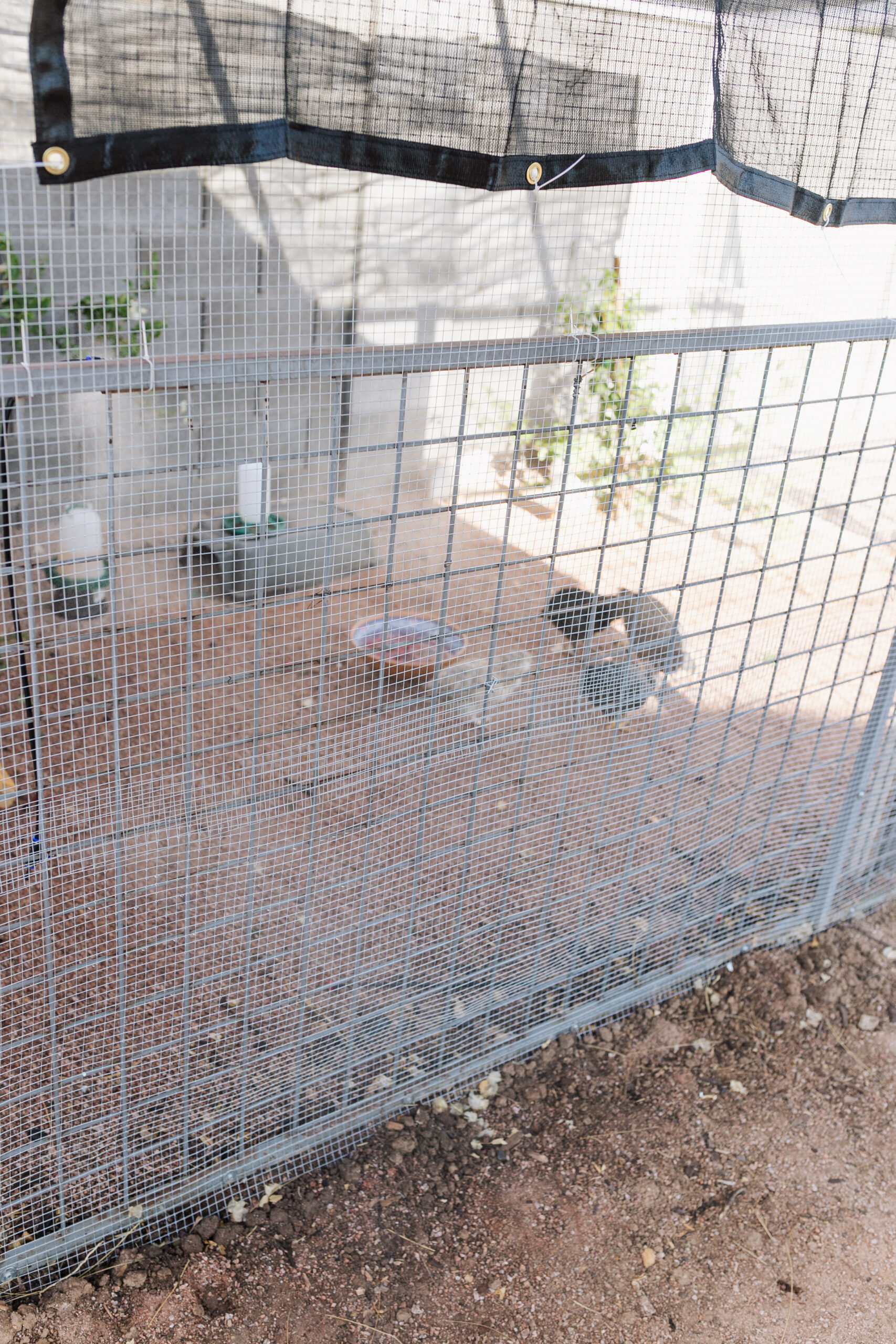 misters, plenty of water, and shade to keep our chickens cool in the summer desert heat. #thelovedesignedlife #theldlhome #desertchickens
