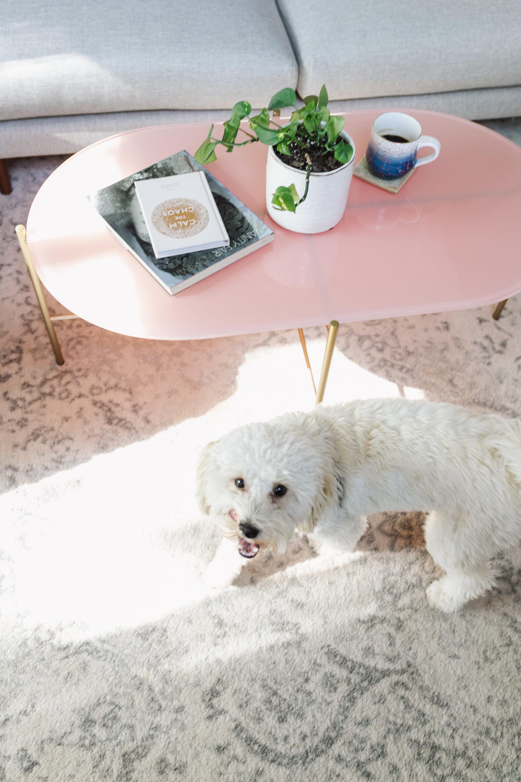 cute pup not included ;) #modernmountainlivingroom #labradoodle #cofffeetable